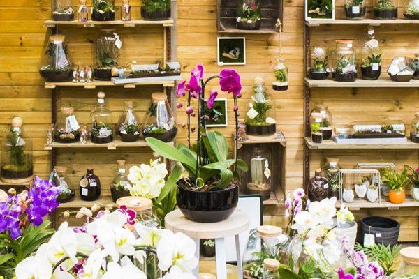 banner-plantes-interieur